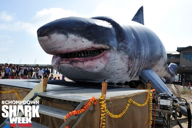 inflatable-shark-2.jpg