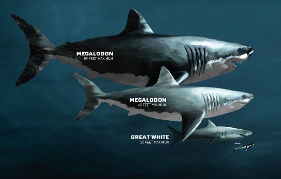 megalodon-shark-size.jpg