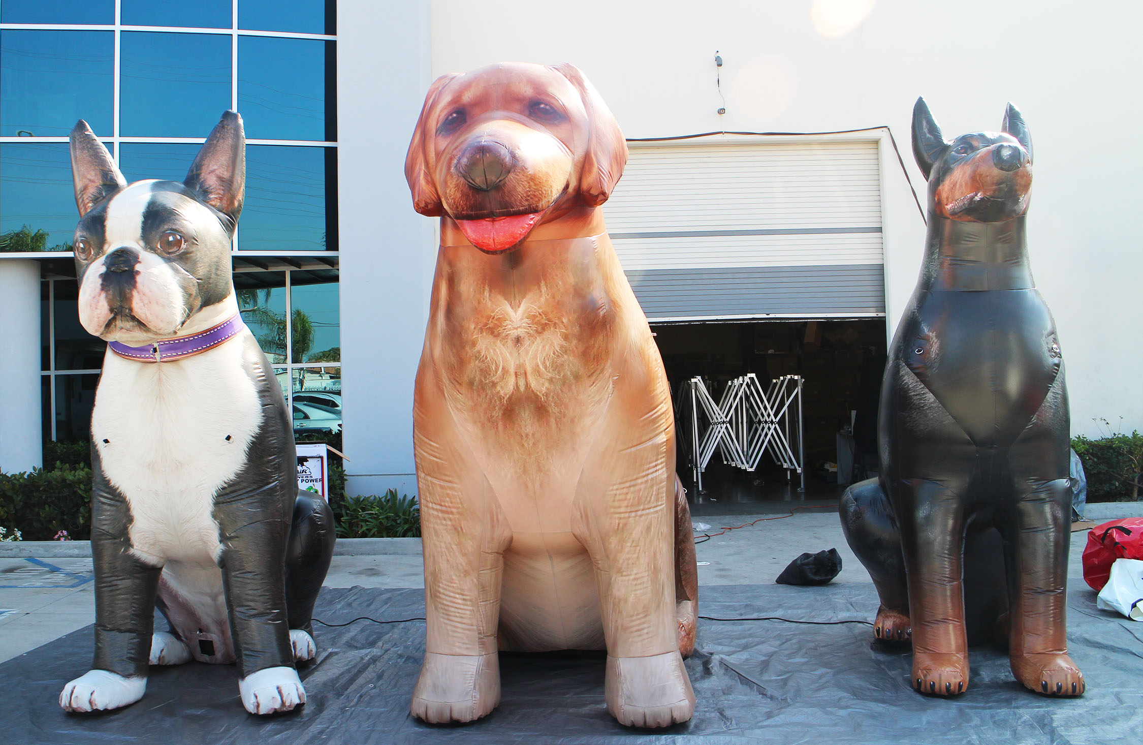 inflatable dogs in a row