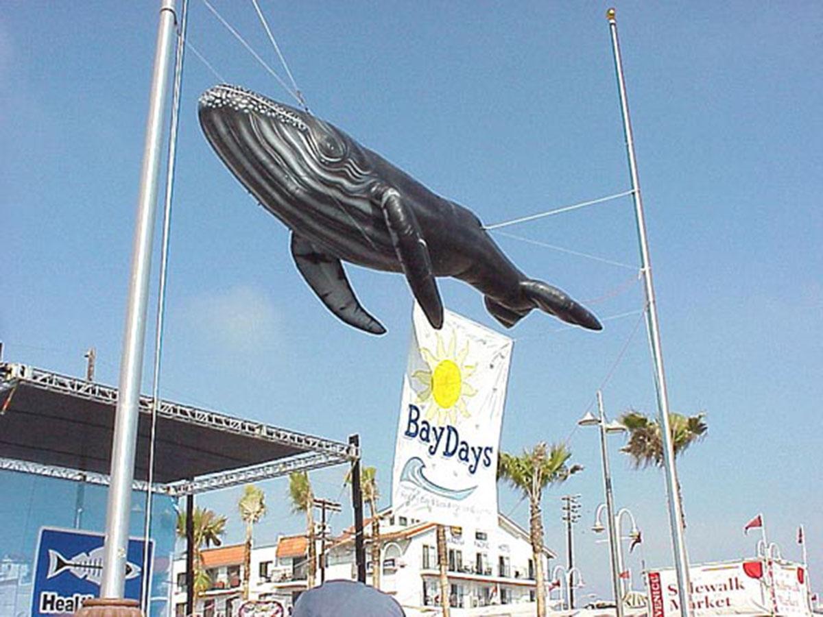 whale replica display