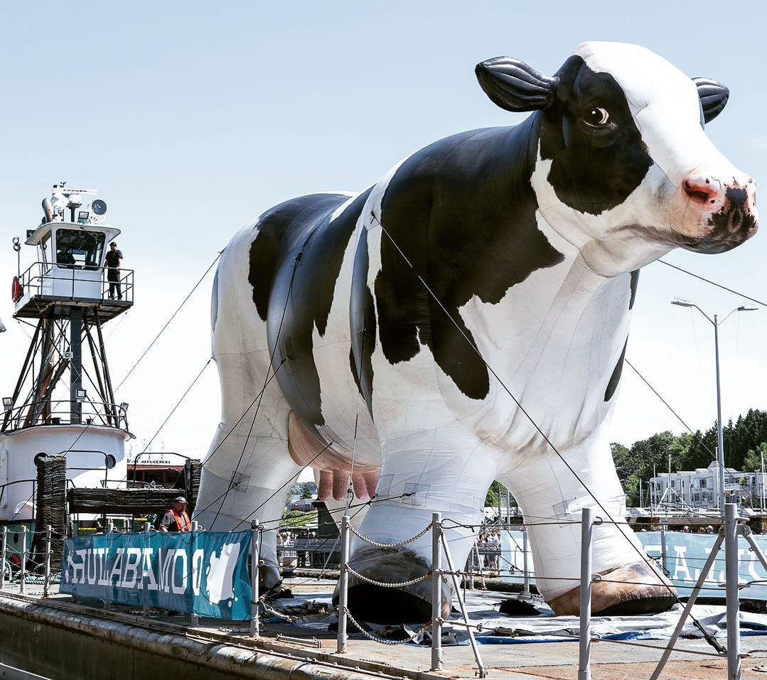 inflatable-cow--8