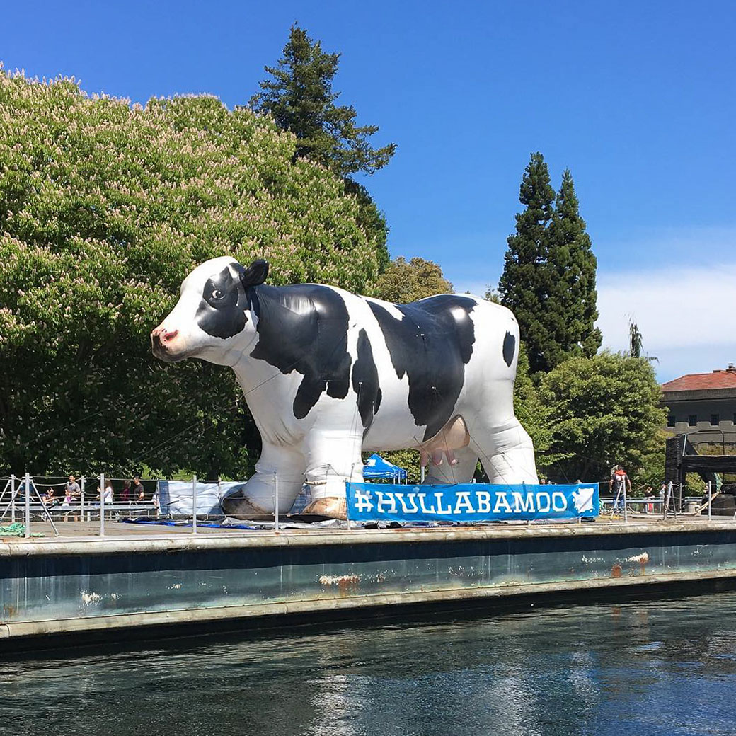 inflatable-cow-
