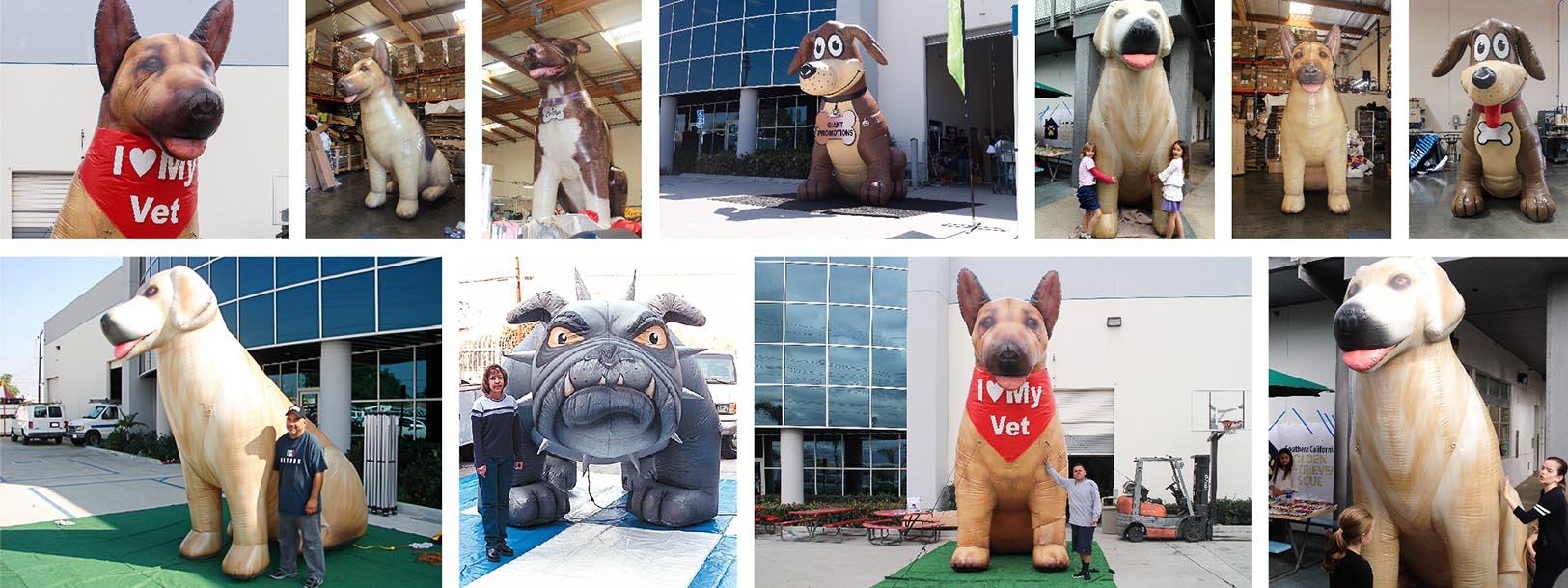 inflatable-canine-collage.jpg