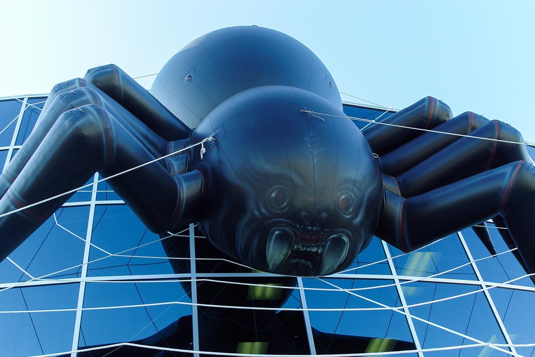 large-spider-on-web
