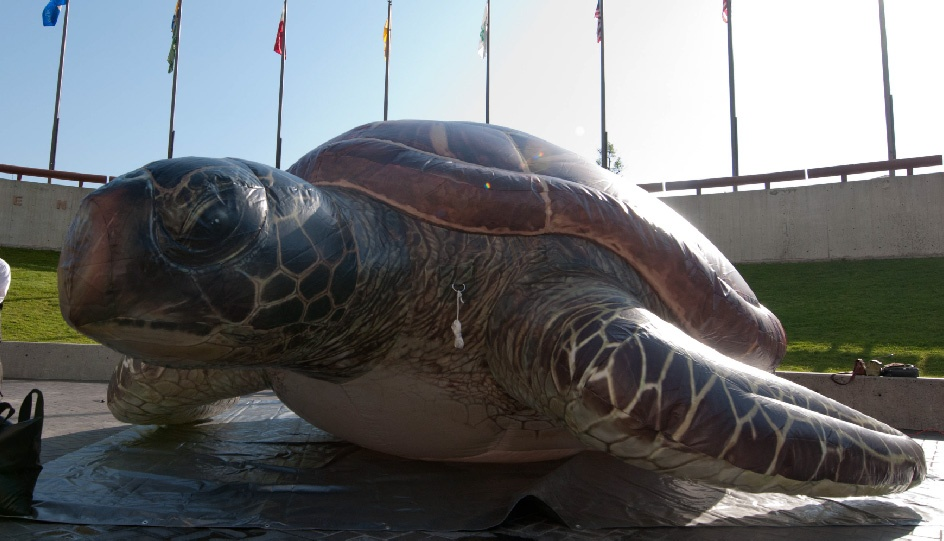 inflatable-sea-turtle-oceanic-rental-01.jpg