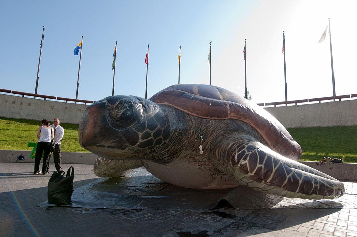 realistic-green-turtle
